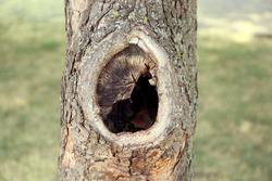 Tree hollow close up