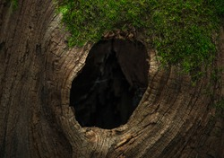 Tree hollow in the old moss-covered stump, located in a large forest, close, Background