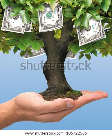 Tree - hundred dollars
