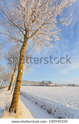 Tree in a cold white winter landscape