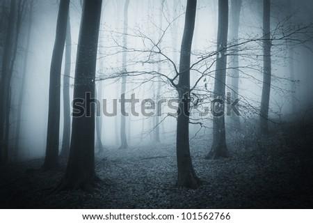 tree in a dark forest