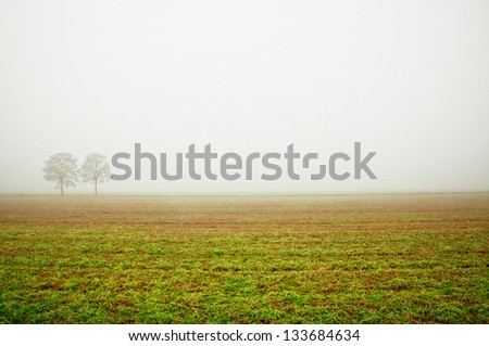 tree in a dense fog during winter