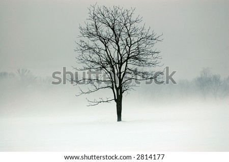 tree in a field surrounded by fog and snow - stock photo