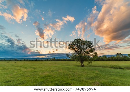 tree in a field with green grass against a forest background, blue sky with pink and gray clouds at dawn on a beautiful warm summer day #749895994