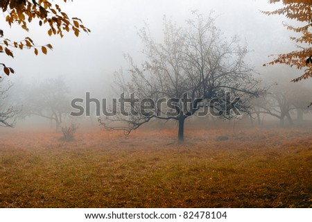 Tree in a fog.Apple tree with fallen down leaves