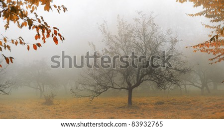 Tree in a fog.Apple tree with fallen down leaves - stock photo
