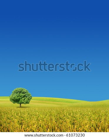 Tree in a wheat field - stock photo