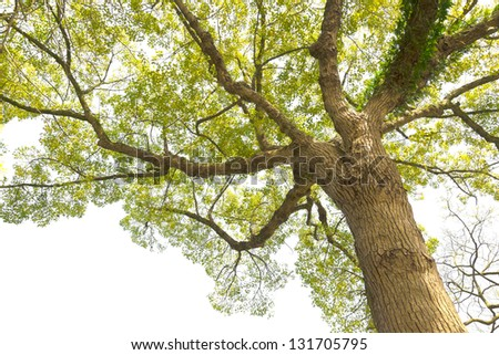 Tree in a white background