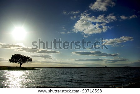 Tree in Alqueva barrage. - stock photo