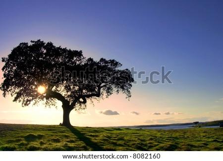 Tree in Alqueva Lake, Portugal.