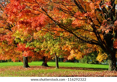 Tree in autumn with all colors of red orange and yellow leaves
