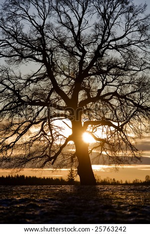 Tree in back-light