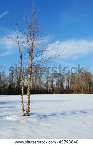 tree in field of snow - stock photo
