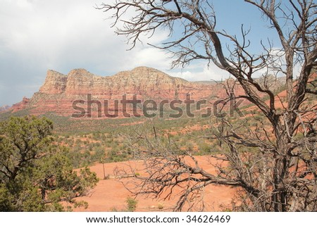 Tree in Front of Arizona Landscape
