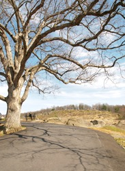 tree in front of Little Round Top