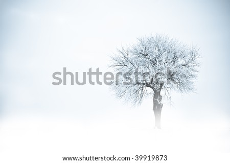 Tree in frost and snow and fog. Winter scene.