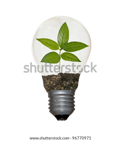 Tree in lamp - stock photo