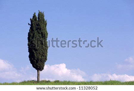 Tree in landscape in Tuscany, Italy