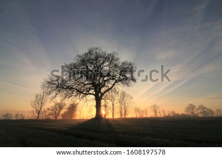 tree in morning mist with sun rays as tree funeral and green funerals concept