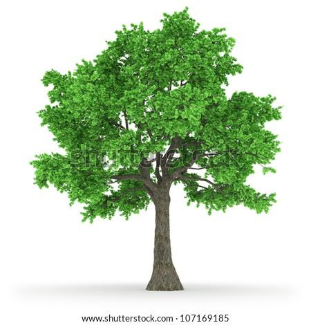 tree in 100Mpix
