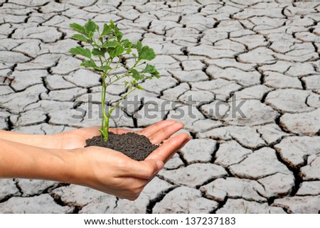 Tree in palm of hand on crack earth,protect the environment concept