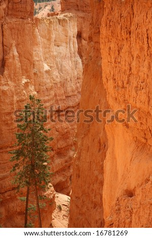 tree in red canyon