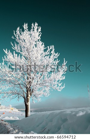 tree in snow #66594712