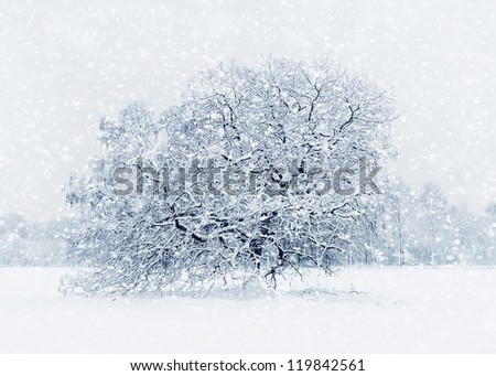 Tree in snow after heavy snowfall