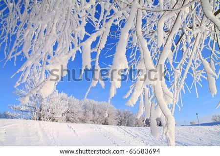 tree in snow on celestial background