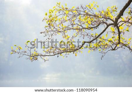 tree in spring - stock photo