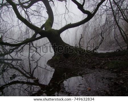 Tree in swamp