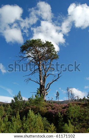 tree in the cairngorms national park scotland