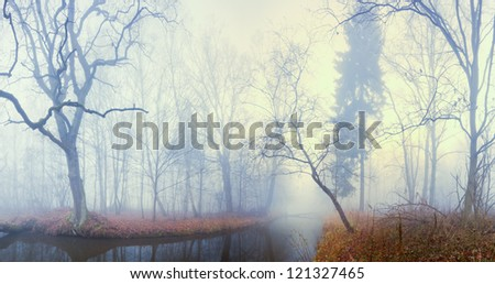 tree in the fog - stock photo