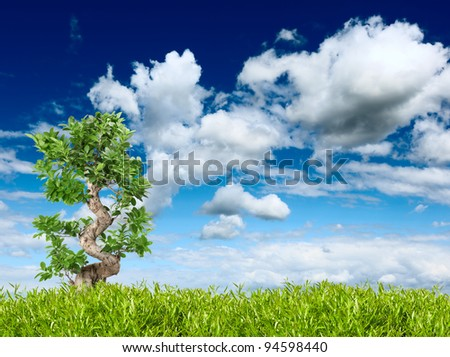 tree in the grass on the sky background