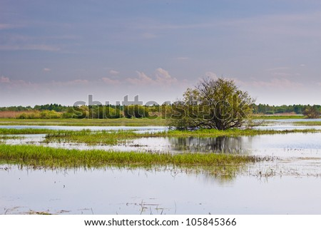 Tree in the middle of Biebrza swamps