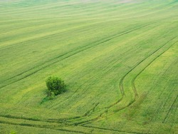 tree in the middle of green field with trail path trough it, aerial view with textured effect