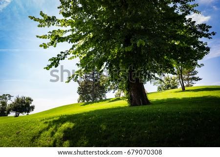 Tree in the monastery garden - Shutterstock ID 679070308