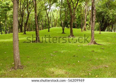 tree in the park, green grass in the park