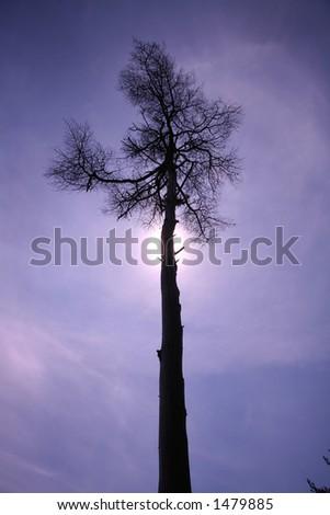 tree in the sky Stockfoto ©