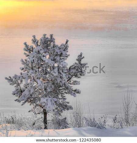 Tree in the snow at sunrise