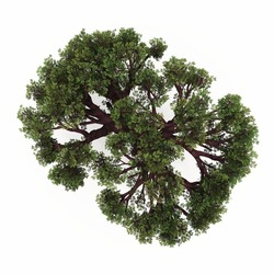 Tree in top view isolated white background