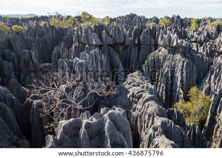 Tree in Tsingy de Bemaraha National Park, Madagascar Photo stock ©