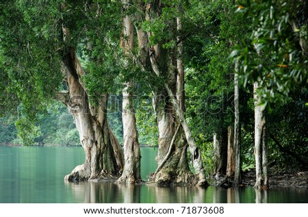 tree in water at forest