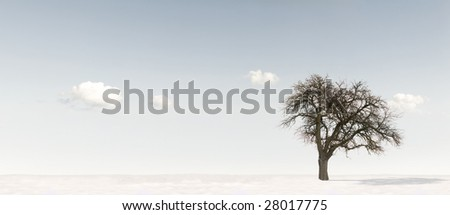 Tree in Winter landscape - stock photo
