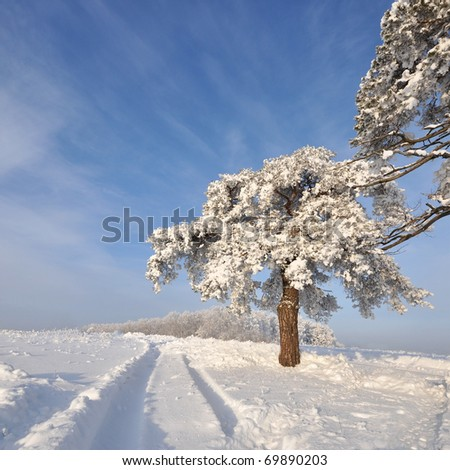 tree in winter with snow covered fields under sun