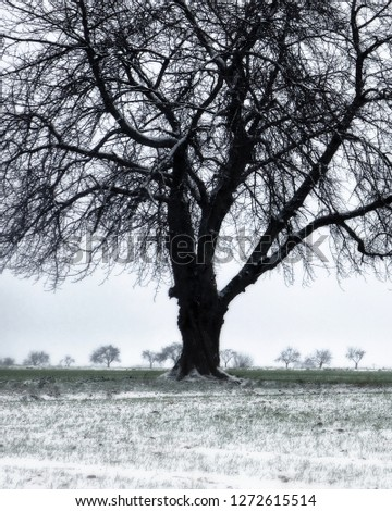 tree in wintry field #1272615514