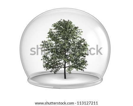 Tree inside glass bowl, concept of environmental protection and conservation, isolated on white background