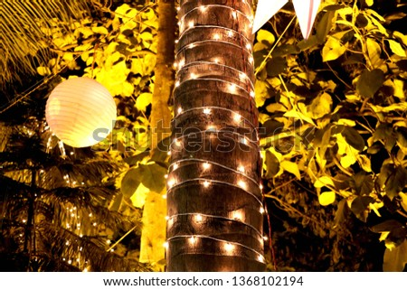 Tree is decorate with light
