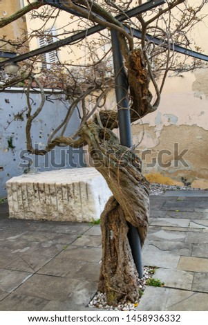 tree is growing around a metal stand #1458936332