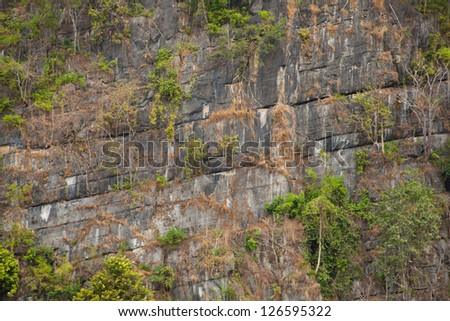 tree is up at the cliff. Tree perched on the cliff of a steep mountain legs in nature.